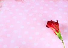 Rote Blume auf Retro- Schmutzhintergrund Stockbilder