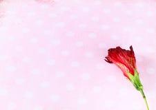 Rote Blume auf Retro- Schmutzhintergrund Stockfotografie