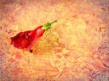Rote Blume auf Retro- Schmutzhintergrund Lizenzfreie Stockbilder