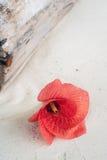 Rote Blume auf Sand Lizenzfreie Stockfotografie