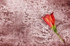 Rote Blume auf Schmutzhintergrund Stockfotos