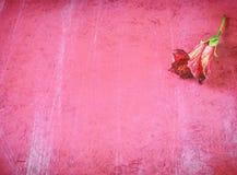 Rote Blume auf Schmutzhintergrund Lizenzfreie Stockfotografie