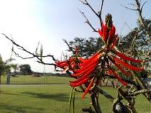 Rote Blume auf trockenem Niederlassungsbaum stockfotos