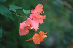 Rote Blume durch den Fluss Stockfotografie