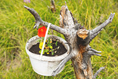 Rote Blume in einem Eimer auf einem Gras Stockfoto