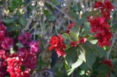 Rote Blume im Busch Stockfotografie