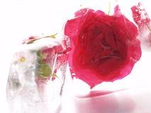 Rote Blume im Eis Stockfotos