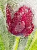 Rote Blume im Eis Stockbild