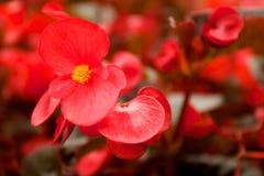 Rote Blume im Garten Stockfoto