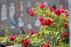 Rote Blume im Garten lizenzfreie stockfotos