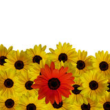Rote Blume im Gelb Lizenzfreie Stockfotos