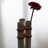 Rote Blume im modernen Vase auf neutralem Hintergrund Lizenzfreies Stockfoto