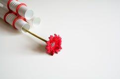 Rote Blume im modernen Vase auf neutralem Hintergrund Lizenzfreies Stockbild