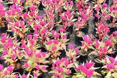 Rote Blume mit Blatthintergrund Lizenzfreies Stockbild
