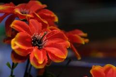Rote Blume mit den mehrfachen Blütenstaub lizenzfreie stockfotos