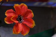 Rote Blume mit den mehrfachen Blütenstaub stockfoto