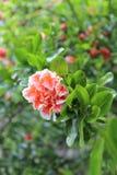 Rote Blume mit grünen Blättern Lizenzfreie Stockfotografie
