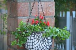 Rote Blume mit weißen Töpfen stockfoto