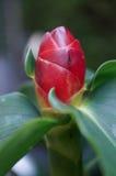 Rote Blume und Ameisen Stockfotografie