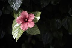 Rote Blume und Blätter Lizenzfreies Stockbild