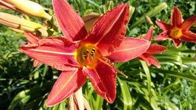 Rote Blume und Blüte Natur ist wunderbar Lizenzfreies Stockfoto
