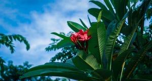 Rote Blume und blauer Himmel stockfotos