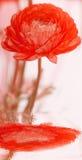 Rote Blume und Reflexion stockfotos
