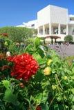 Rote Blume, weißer Getty Stockbild
