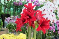 Rote Blumen Stockbilder