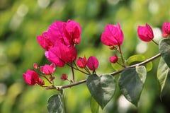 Rote Blumen Stockbild