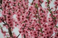 Rote Blumen royaltyfria foton