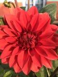 Rote Blumen Stockfotografie