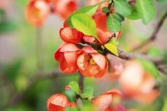 Rote Blumen auf einer Niederlassung Stockbilder