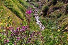 Rote Blumen auf einer Wiese in den Bergen stockbilder