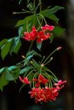 Rote Blumen blühen lizenzfreies stockbild