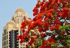 Rote Blumen - Blütenbaum mit islamischer Architektur im Hintergrund Lizenzfreie Stockbilder