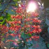 Rote Blumen in den Sonnenuntergang Lizenzfreie Stockfotos