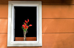 Rote Blumen an der weißen Fenster Whit-Orangenwand stockfoto