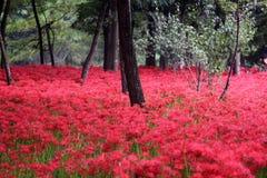 Rote Blumen, die den Boden in einem Wald umfassen Stockfotos