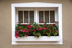 Rote Blumen, die ein New Mexiko-Fenster schmücken Stockbild