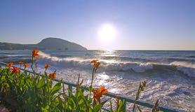 Rote Blumen durch das Meer Lizenzfreie Stockfotos