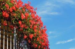 Rote Blumen an einem Balkon Stockbild