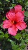 Rote Blumen in einem schönen Park lizenzfreie stockfotos