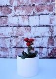 Rote Blumen in einem weißen Vase auf einem Ziegelsteinhintergrund Lizenzfreie Stockfotos