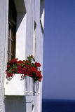 Rote Blumen am Fenster Lizenzfreie Stockbilder