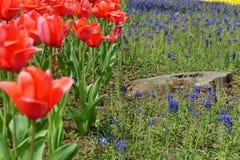 Rote Blumen gegen blaue Blumen lizenzfreies stockfoto