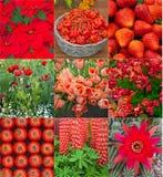 Rote Blumen, Gemüse und Beerencollage Stockfoto
