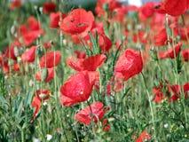 Rote Blumen, grünes Gras lizenzfreie stockfotografie