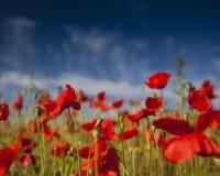 Rote Blumen, grünes Gras Stockbild