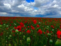 Rote Blumen, grünes Gras Lizenzfreies Stockfoto